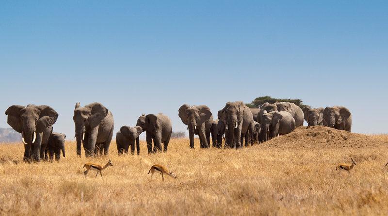 Una nuova avventura – la Tanzania.